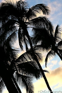 WaikikiBeach(web)_0026