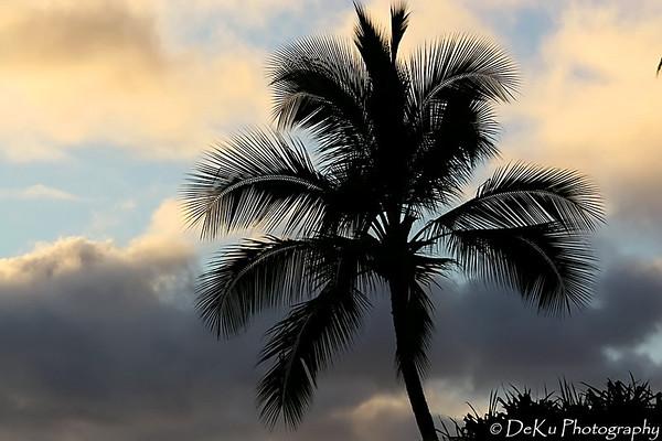 WaikikiBeach(web)_0025