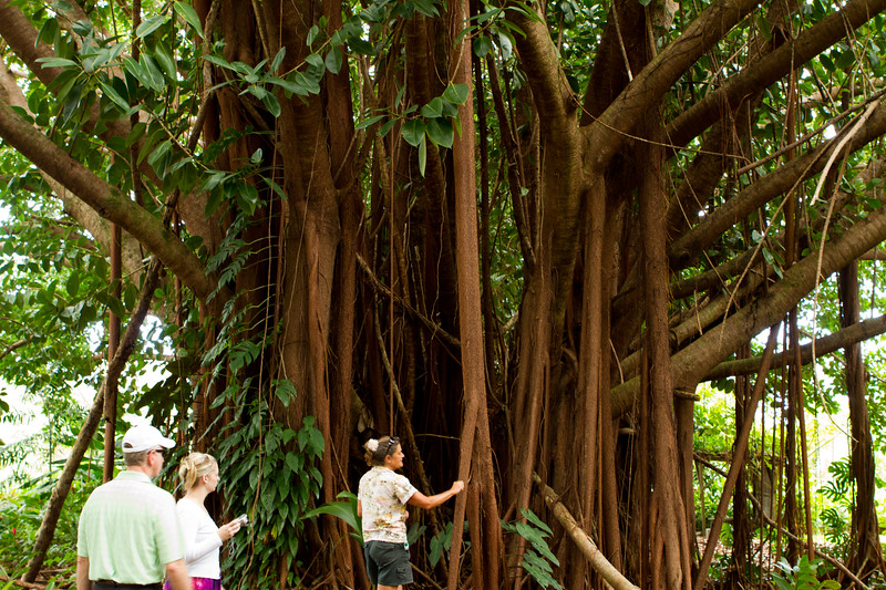 Hawaii Week 1-0796.jpg