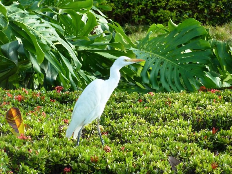 Hawaii Week 1-1010172.jpg