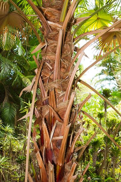 Hawaii Week 1-0791.jpg