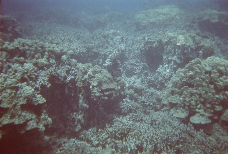 Hawaii Week 1-004.jpg