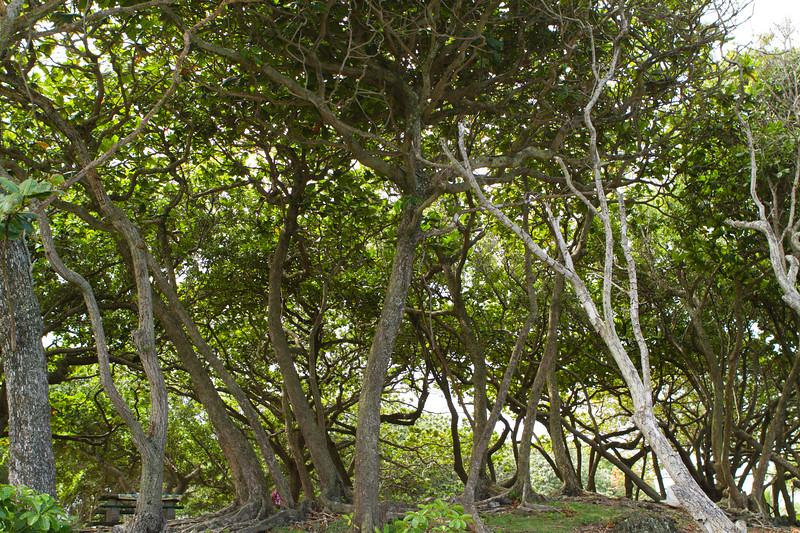 Hawaii Week 1-0861.jpg