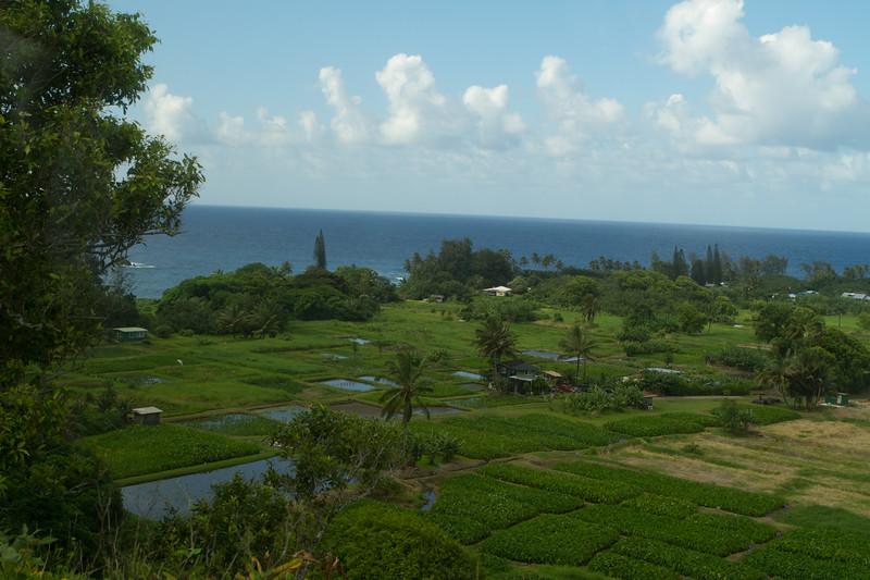 Hawaii Week 1-0875.jpg