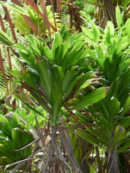 Hawaii Week 1-1000912.jpg