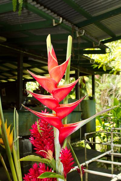 Hawaii Week 1-0803.jpg