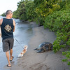 The turtle is Barnacle Bill.  The man and dog should have given Barnacle Bill more room.  He/she is just about the largest green sea turtle ever spotted in Hawaii.  How lucky am I?  Rick says he sees Barnacle Bill just once or twice a year.