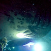 Terrible photo, but it gives perspective on just how huge these mantas are (that's a diver in the lower left corner).