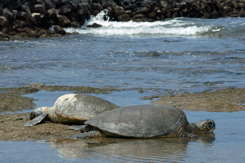 Carrie and Rick are superb travel guides.  They know all the secret spots on the Big Island, such as the lava tube and this amazing beach where green sea turtles haul out to rest.
