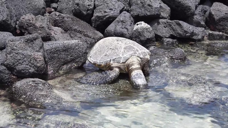 Turtle waking up video