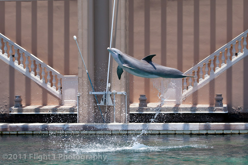 A dolphin jumps at Dolphin Quest