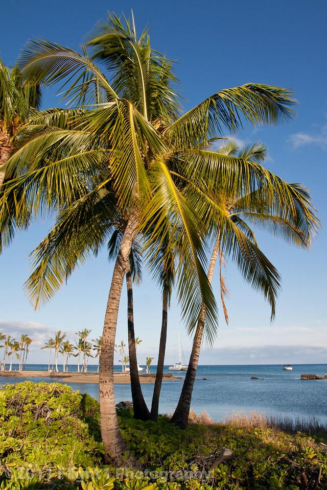 A Big Island morning