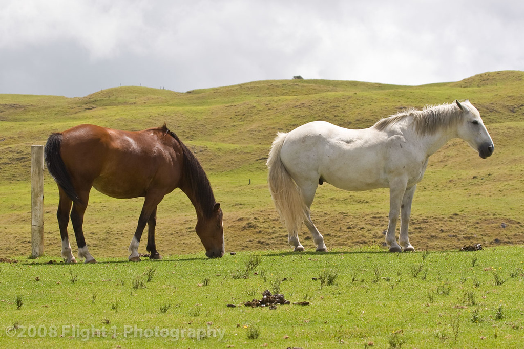 A working horse ranch on the Big Island