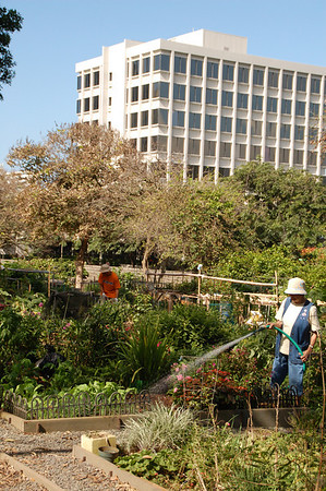 Community gardens with high rises in background