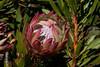 Flower 7438