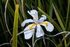 Flower 7455