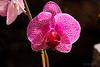 Flower 6807