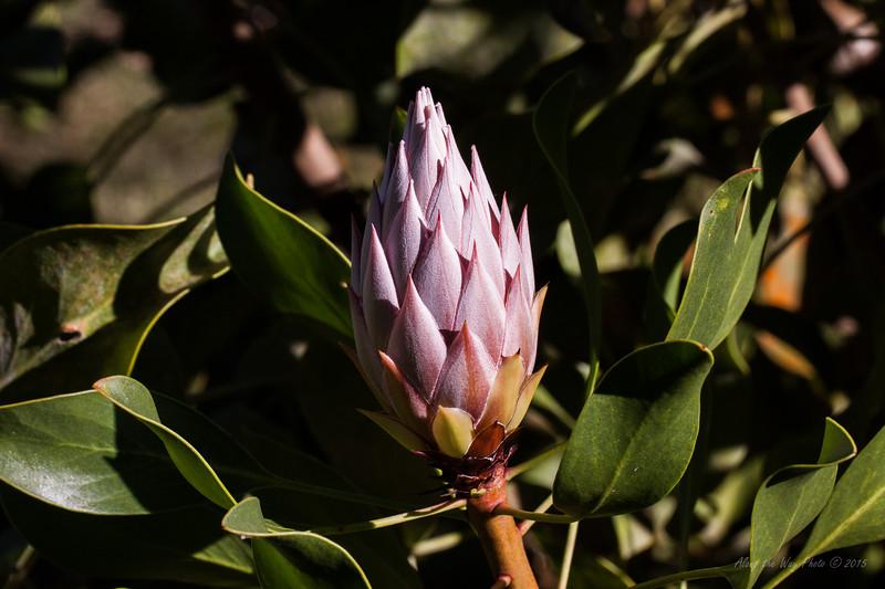 Flower 7425