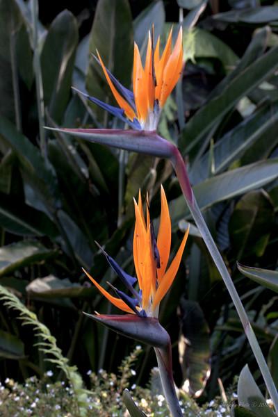 Flower 7382