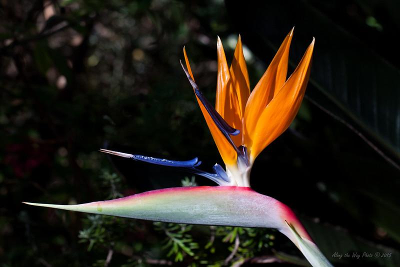Flower 7396