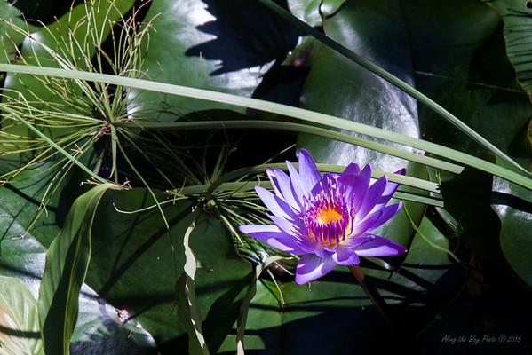 Flower 7913