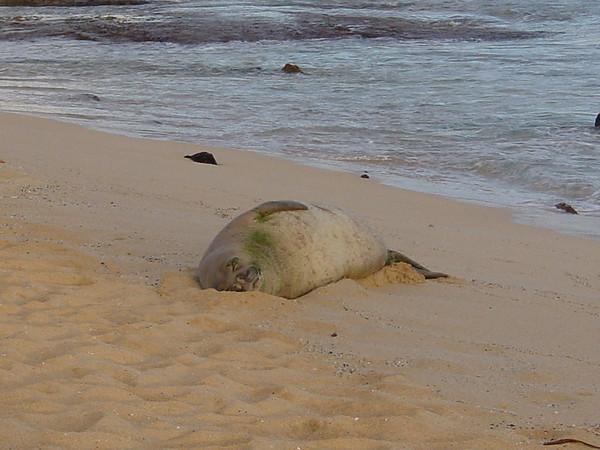 Hawaii - Kauai