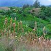 10-24-04 KAUAI 1_0026