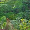 10-24-04 KAUAI 1_0031