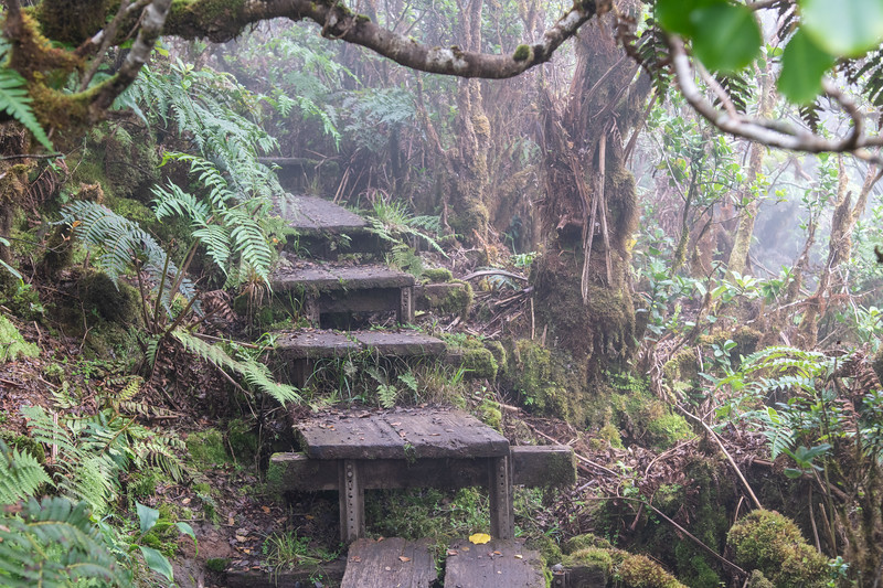 From the viewpoint, these are the steps leading back up to the swamp