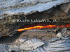 Live lava breakthrough from Kilauea Volcano in Hawaii Volcanoes National Park.