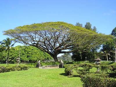 Hawaii Travel Photography - Hilo