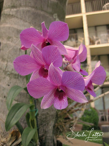 Orchids grafting to the tree