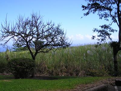 Hilo - Hawaii - USA