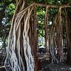 Hawaii_101913_Kondrath_0171