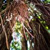 Hawaii_101913_Kondrath_0174