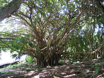 Hawaii2004