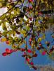 Fall Foliage Hawai'i Style