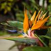 Newly opened Bird of Paradise