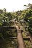 Kauai - Alakai Swamp