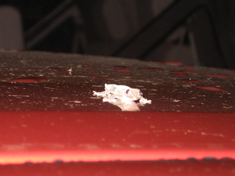 A gecko was on our rental car when we picked it up in the parking lot!