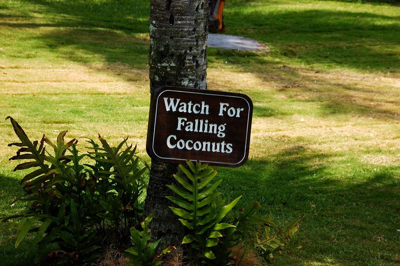 Watch for falling coconuts in Kona
