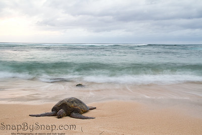 Resting Sea Turtle with Motion Blur Water