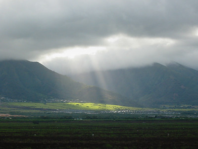 Maui 342