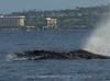 Maui 2013_Whales 196