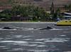 Maui 2013_Whales 092
