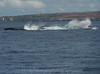 Maui 2013_Whales 195