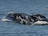 Maui 2013_Whales 199
