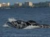 Maui 2013_Whales 201