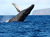 Maui Whales_2019 016