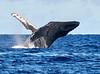 Maui Whales_2019 007